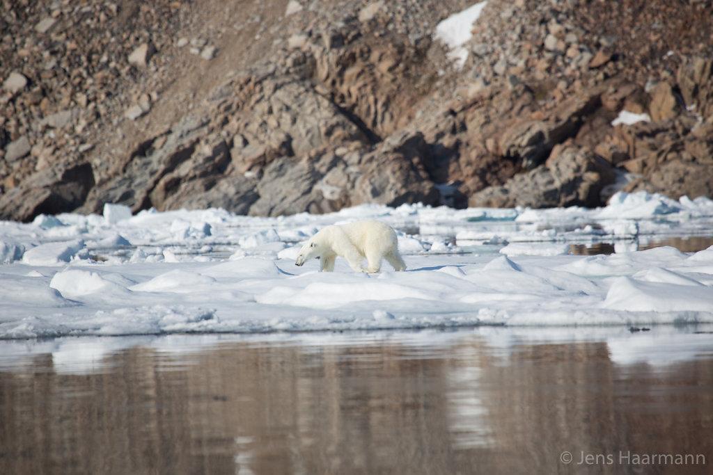 Svalbard 2015