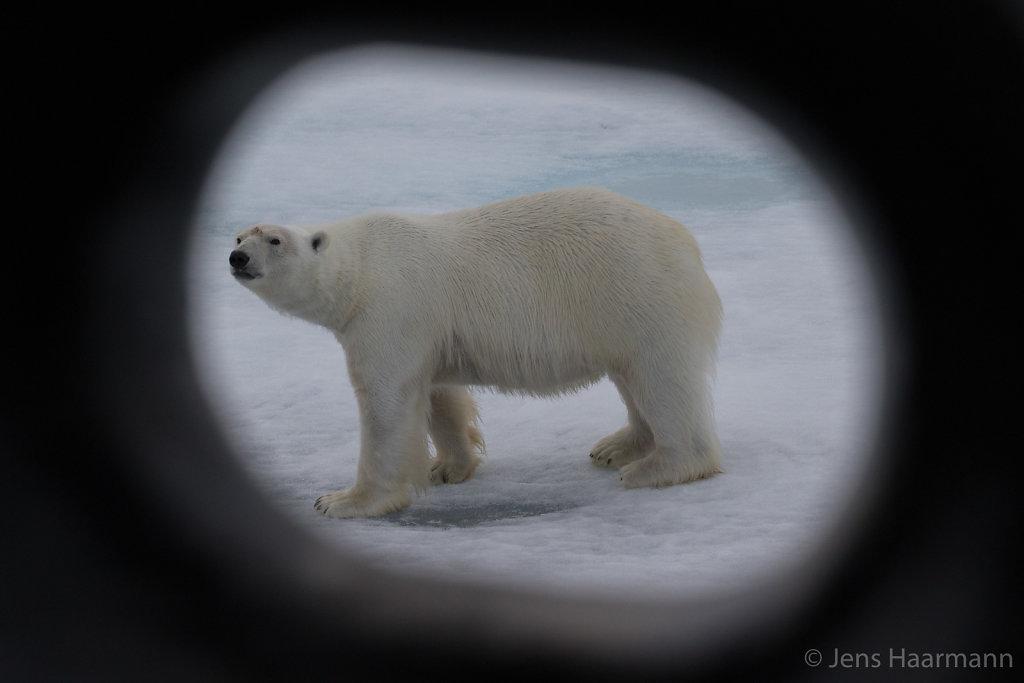 Eisbär ahoi!